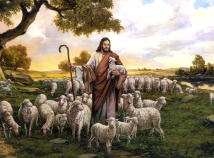 Caring & Feeding His Sheep